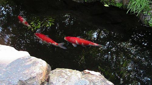 鑁阿寺(ばんなじ) ~栃木県足利市にある国宝の大御堂