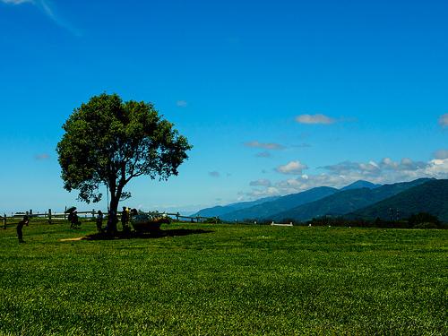 那須高原 南ヶ丘牧場~栃木県那須町にある入場無料の観光牧場~超濃厚なソフトクリームがおすすめ!