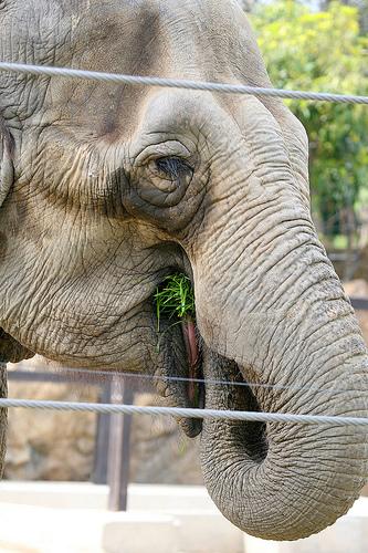 宇都宮動物園 エサやり体験!動物とたくさん触れ合えます!